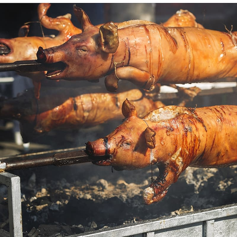Whole roasted pigs on spit above smoking barbecue, selective focus